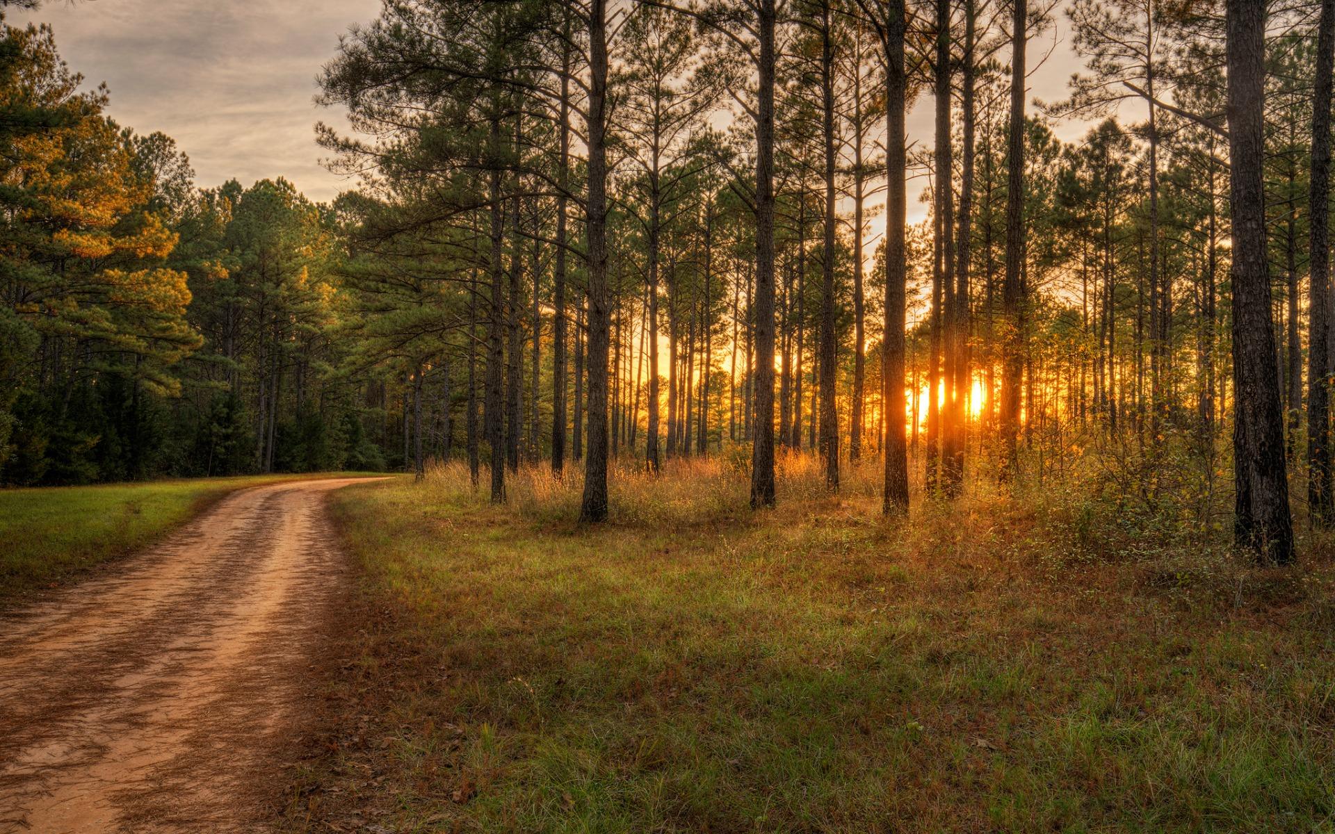 картинки с вечерним лесом подобные подразделения