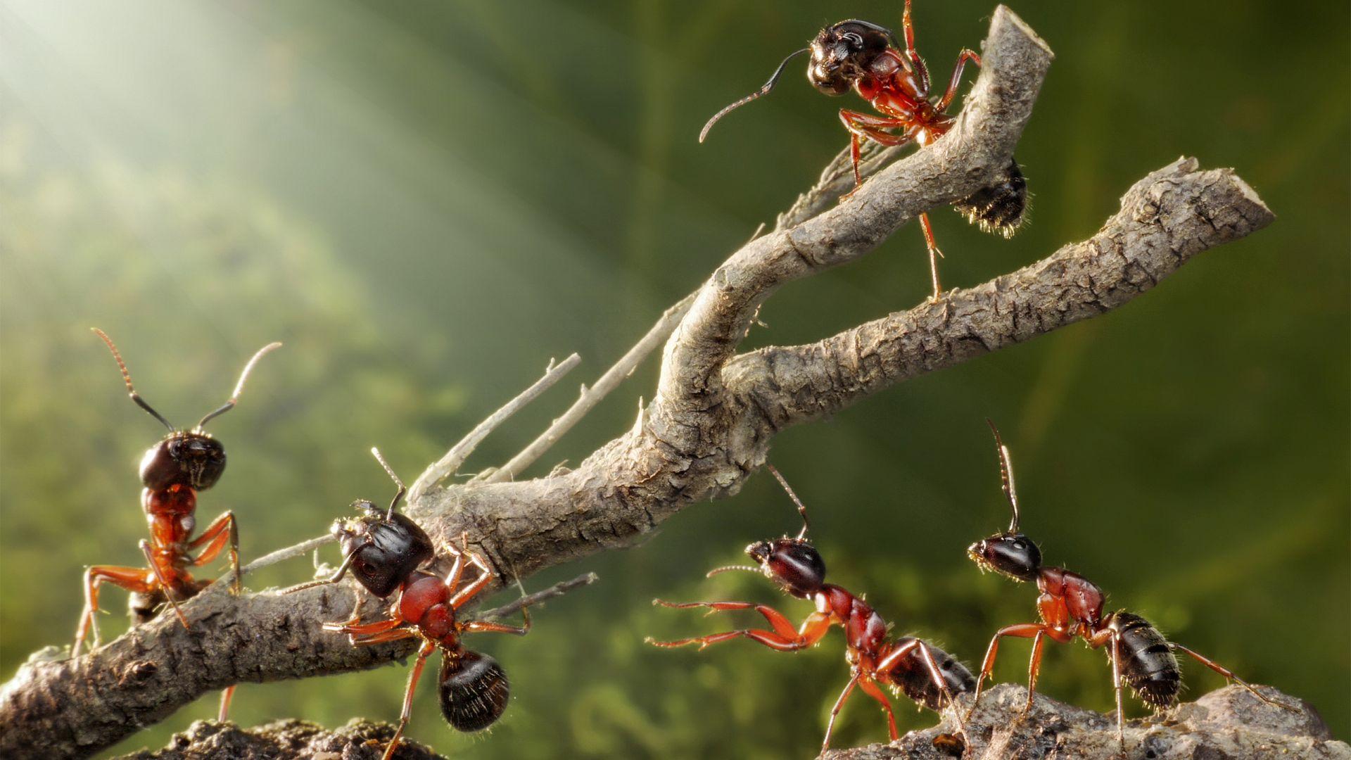 направлены птицы в картинках муравей тому крепеж