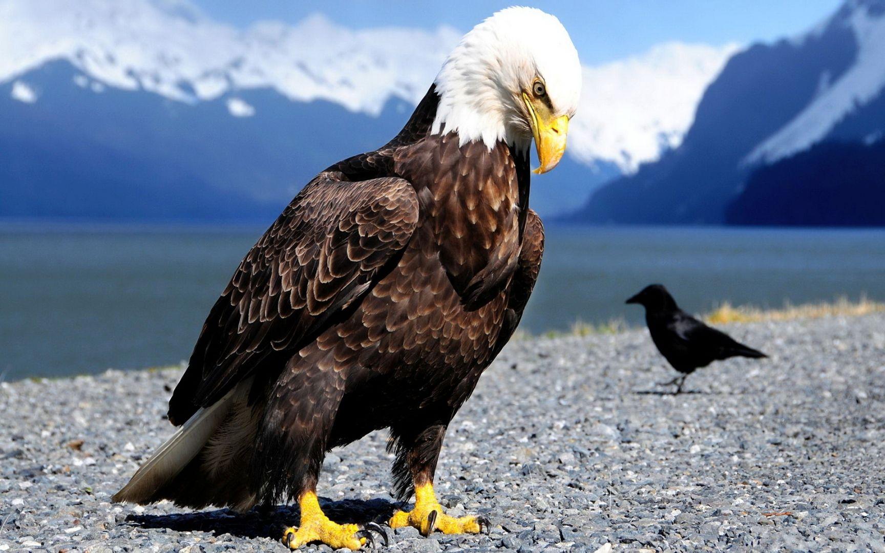 большие картинки с орлами это одна