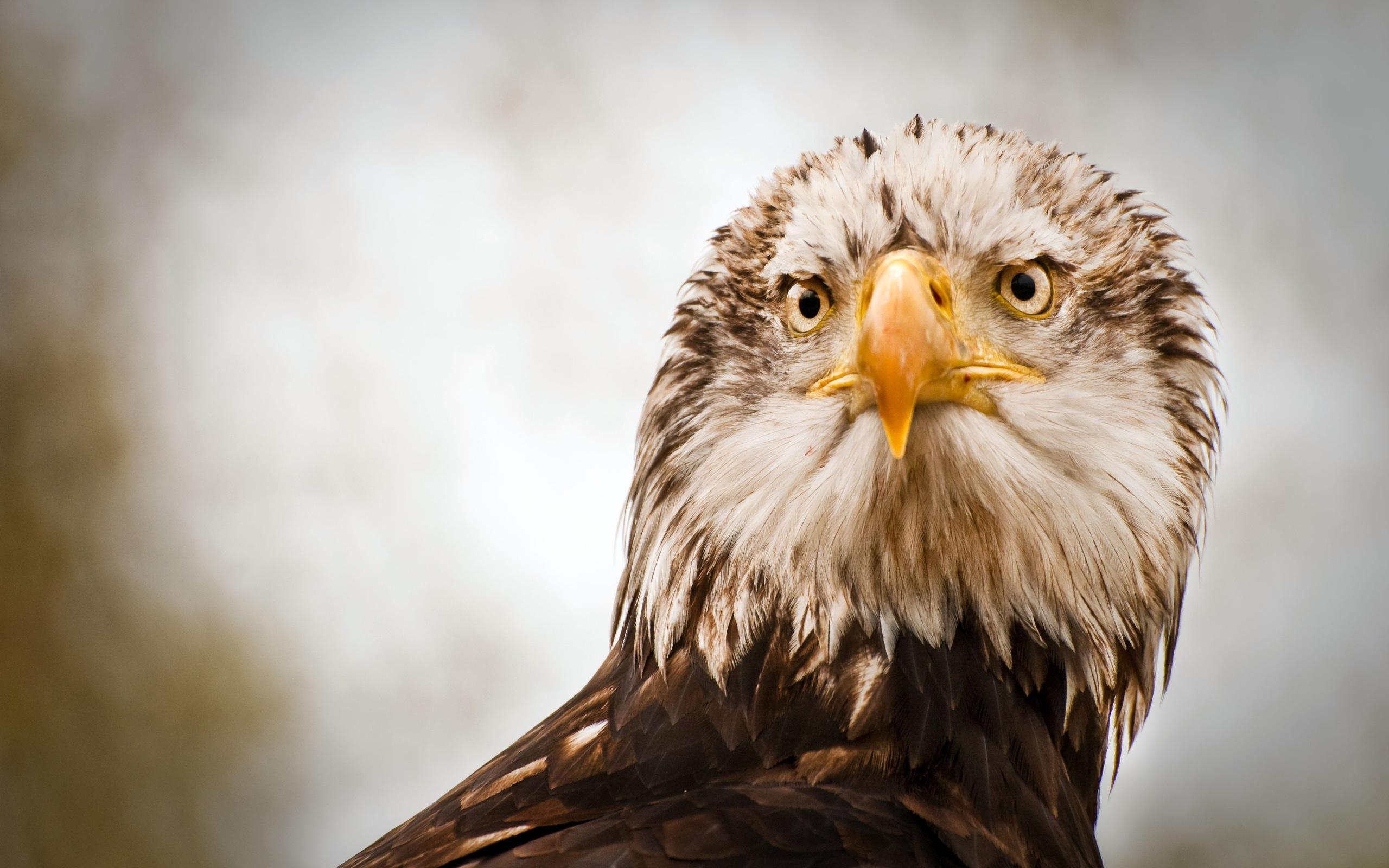 фотографировать картинка орел который есть вещах много культовых