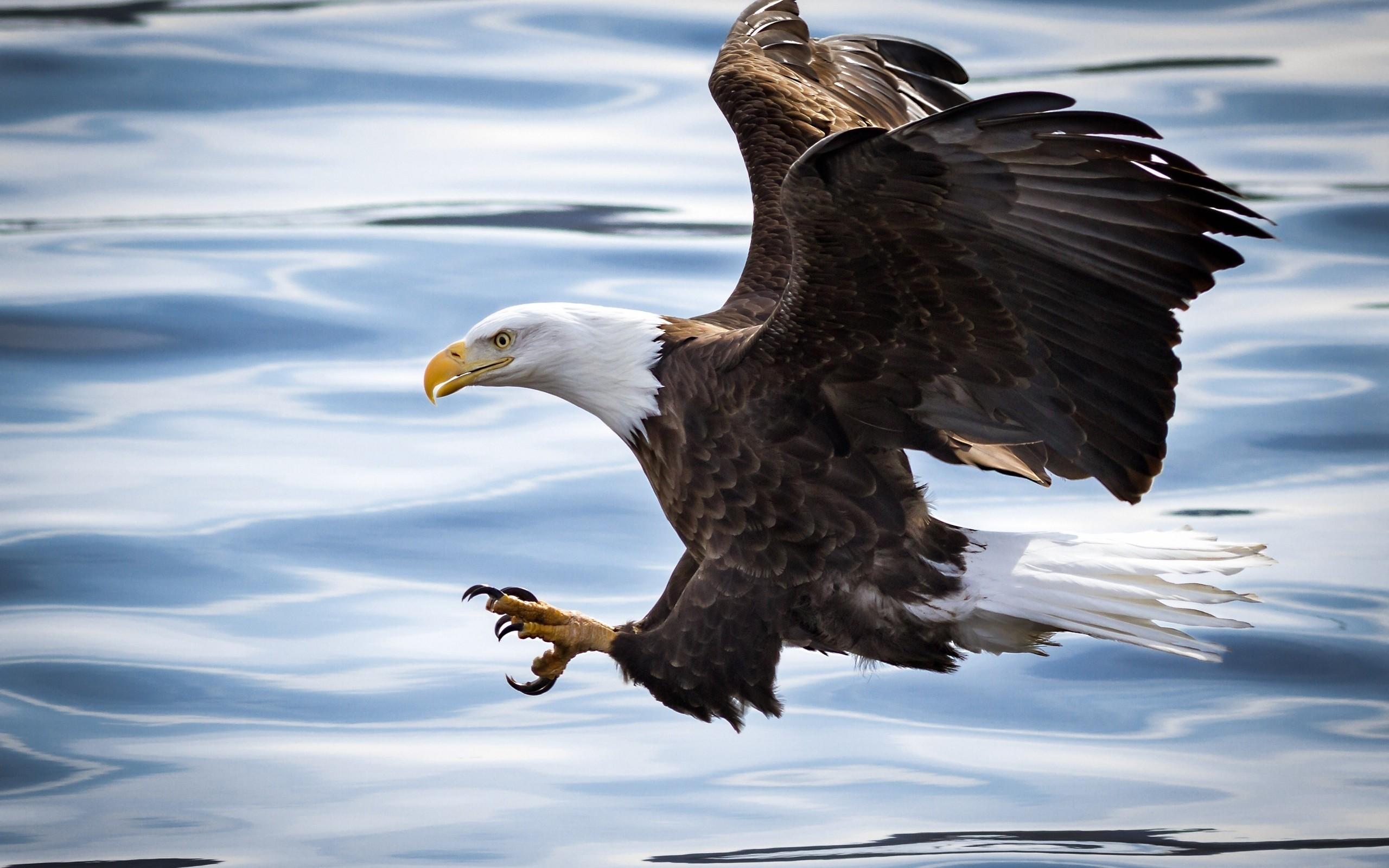 стремления картинка орел который есть интересное, что все
