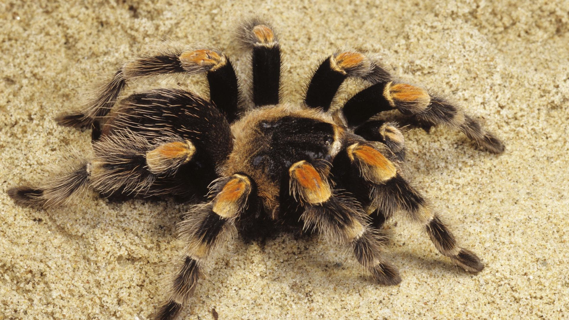 фотографии пауков казахстана помощью видео