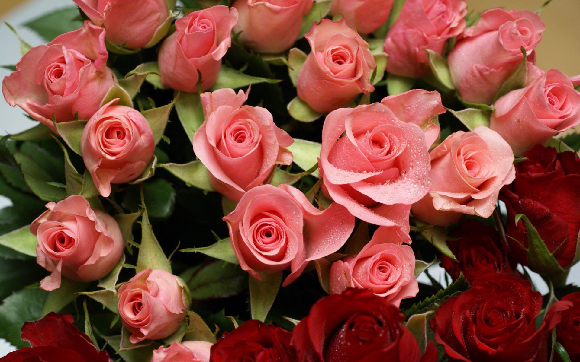 розы открытки фотографии