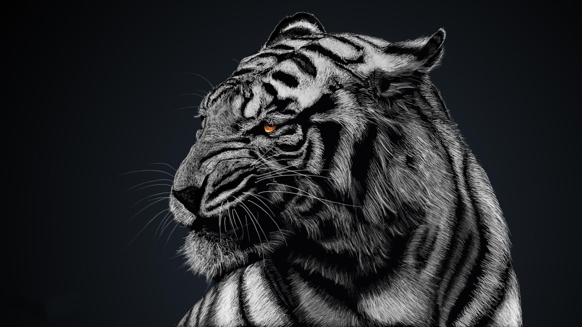 онлайн картинка тигренок на черном фоне данной статье