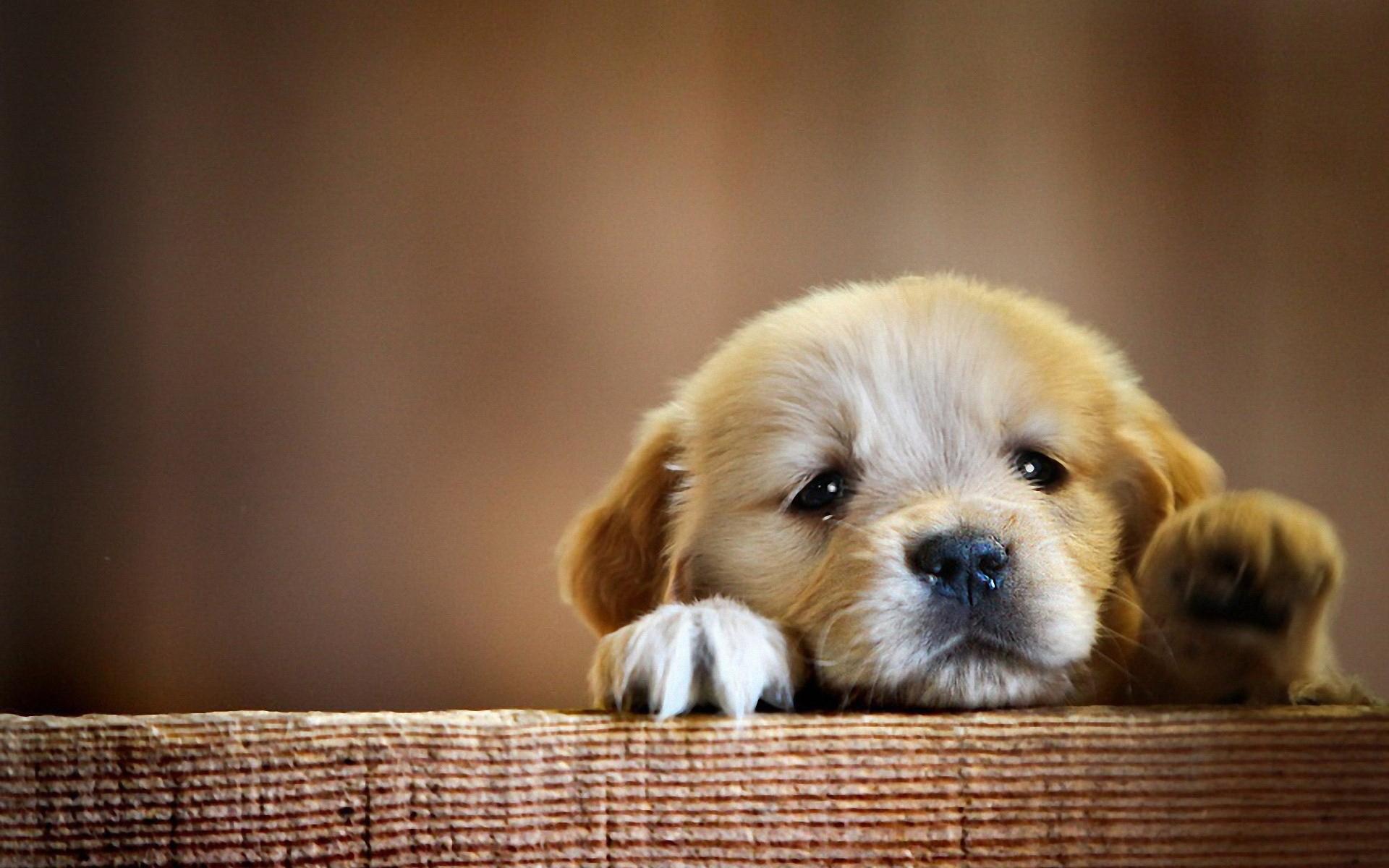 узкой грустная картинка щенка областной краеведческий