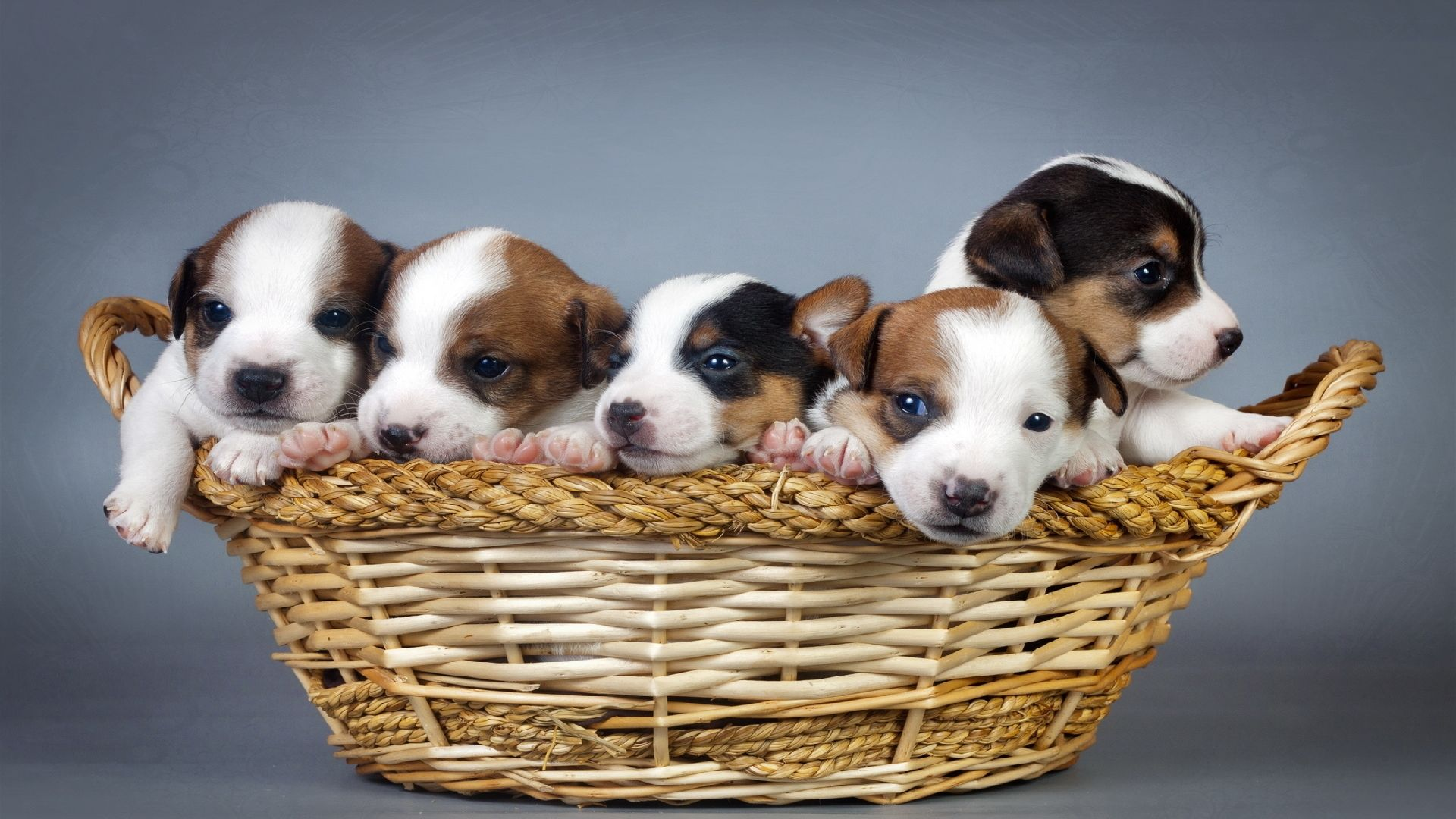 картинки собак щенки смотреть отличается фото сайте