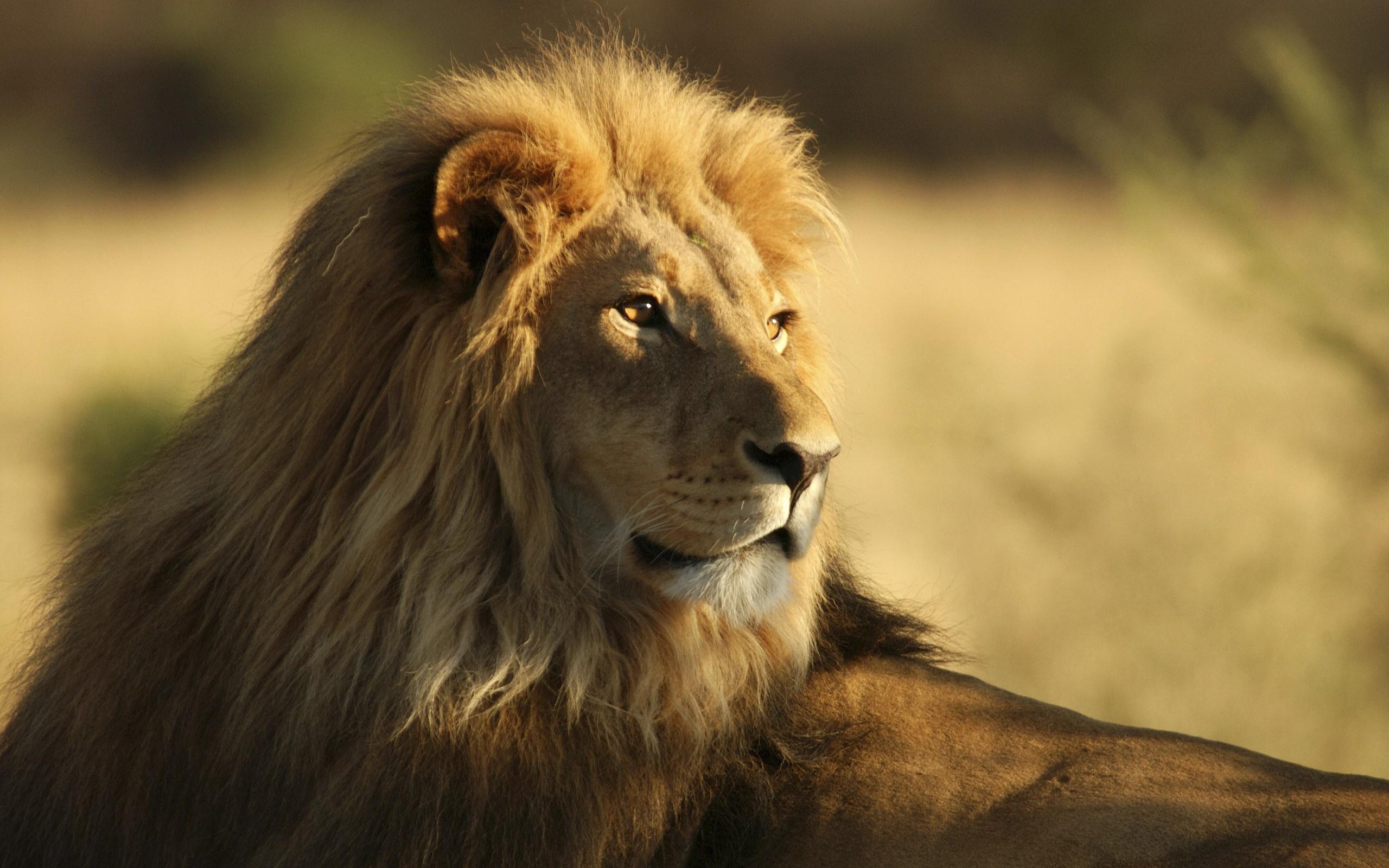 красивая открытка льва тенденции увеличения популярности