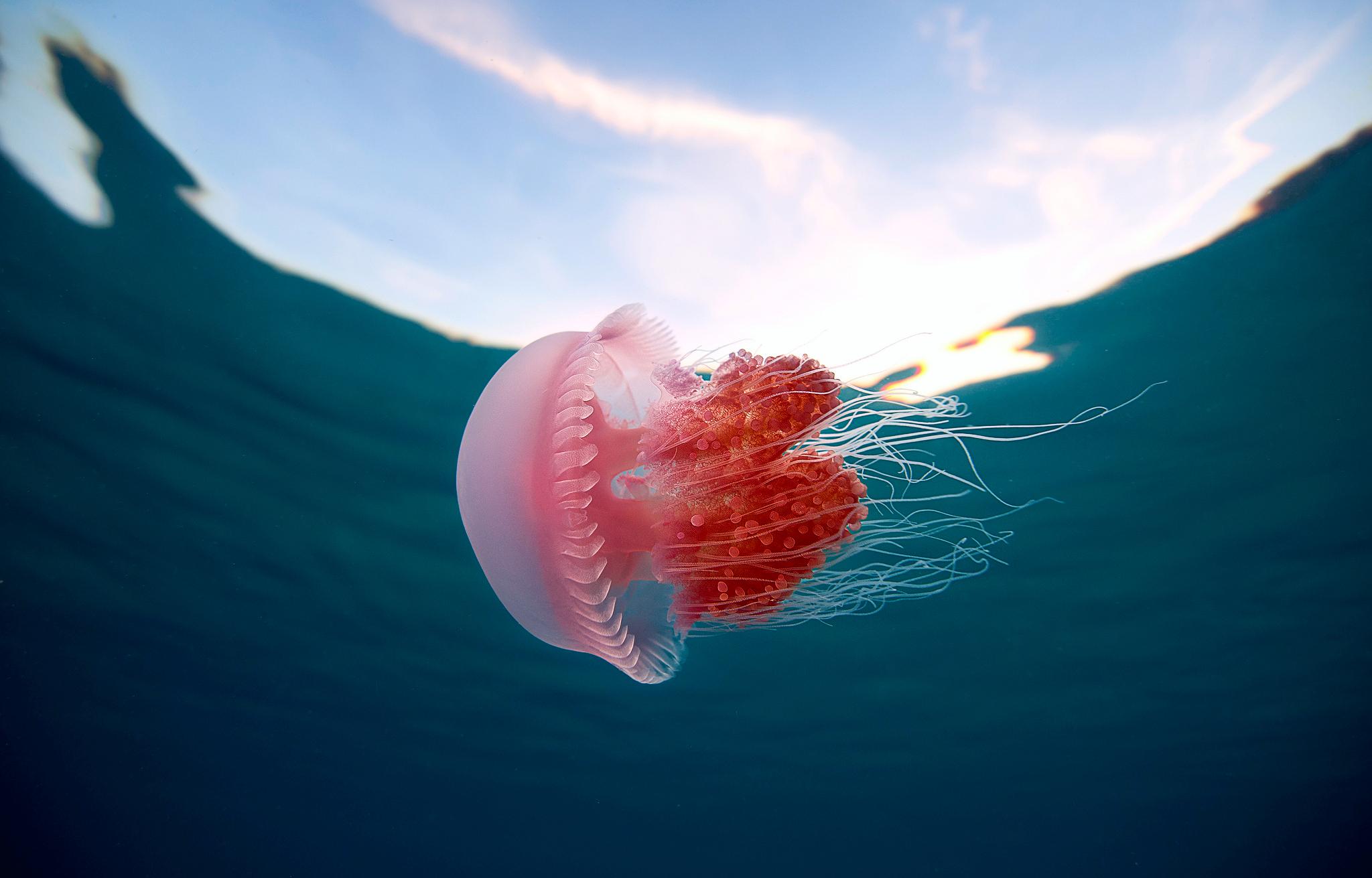 Создание сайта медуза средства создания и сопровождения сайта практическая работа