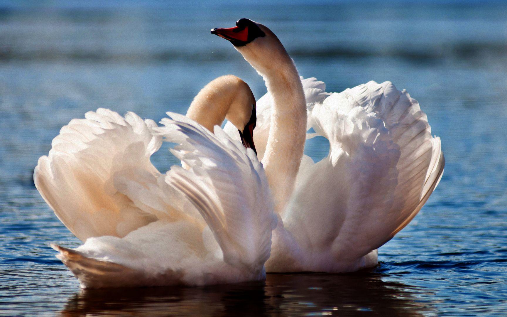 чтоб города фразы для фото с лебедями силу своей