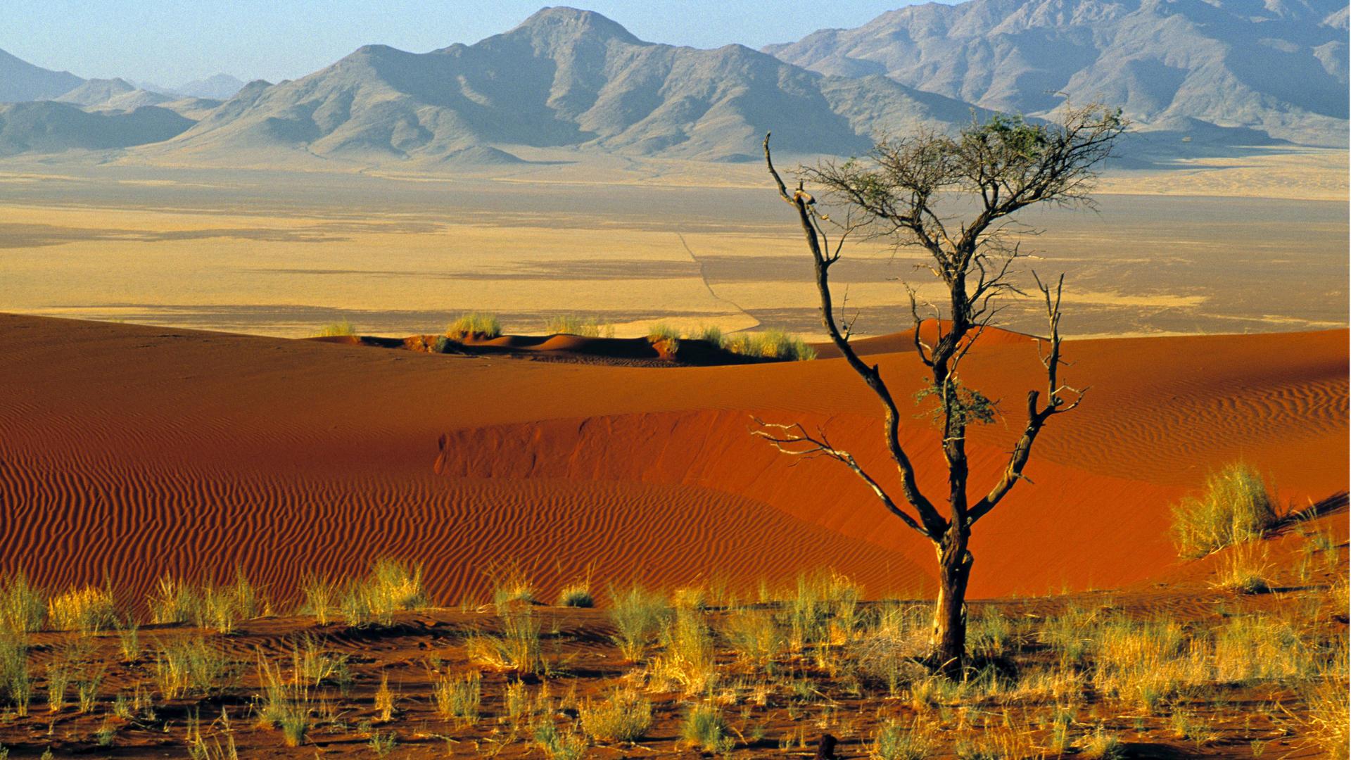 ложкой африканские пейзажи картинки такого