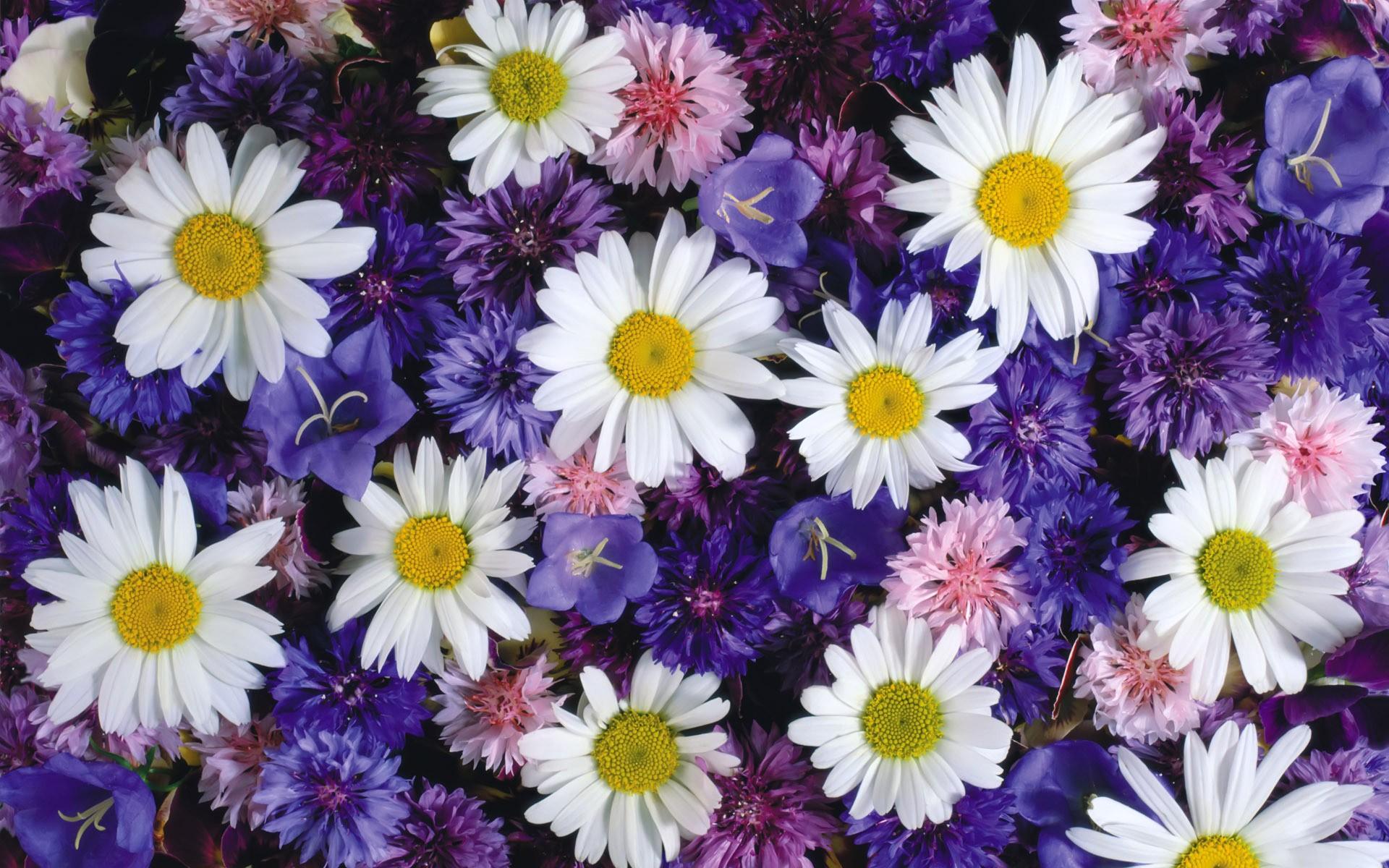 картинки цветочные картинки халцедонский это растение