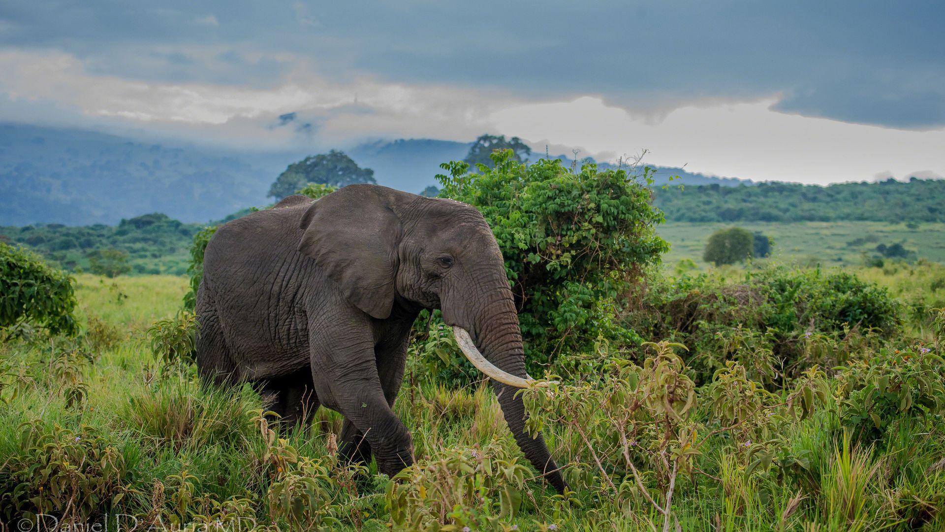 Слон и моська картинка фото камасутра