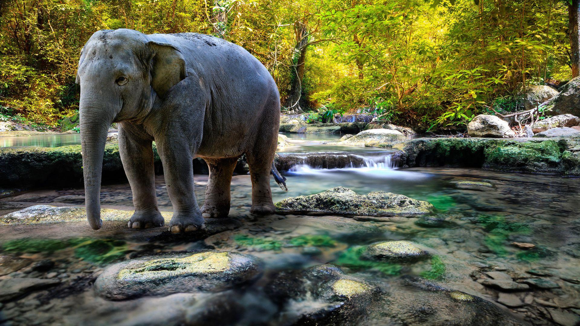 Картинки слон животное как нарисовать каждый