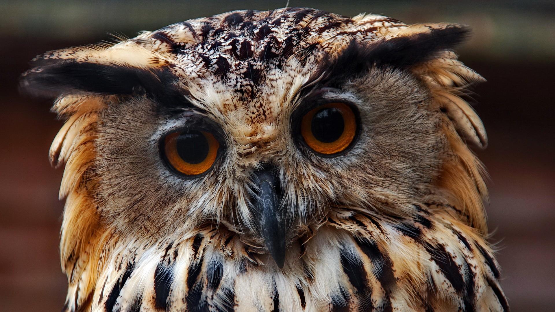 Красивая совы картинки