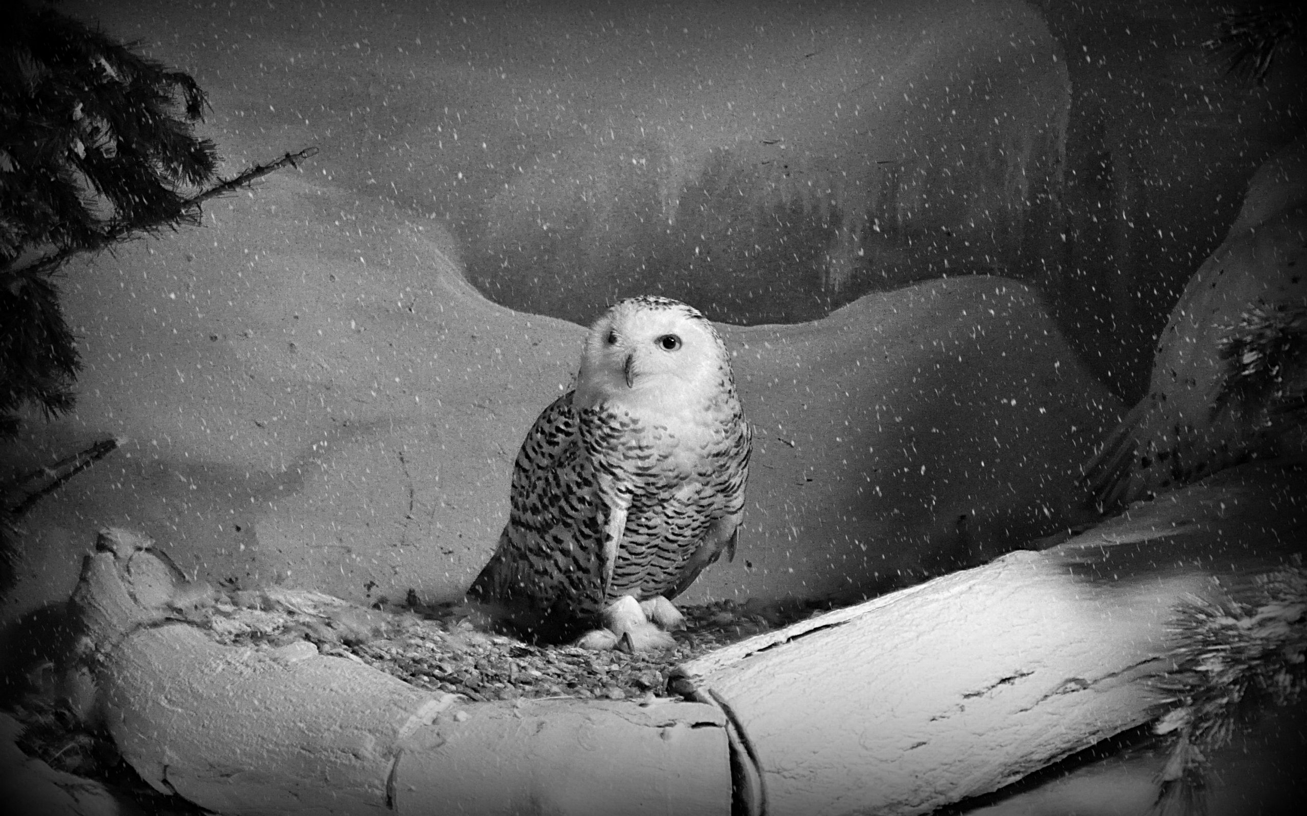 картинки сова колибри пингвиненок орел спальне