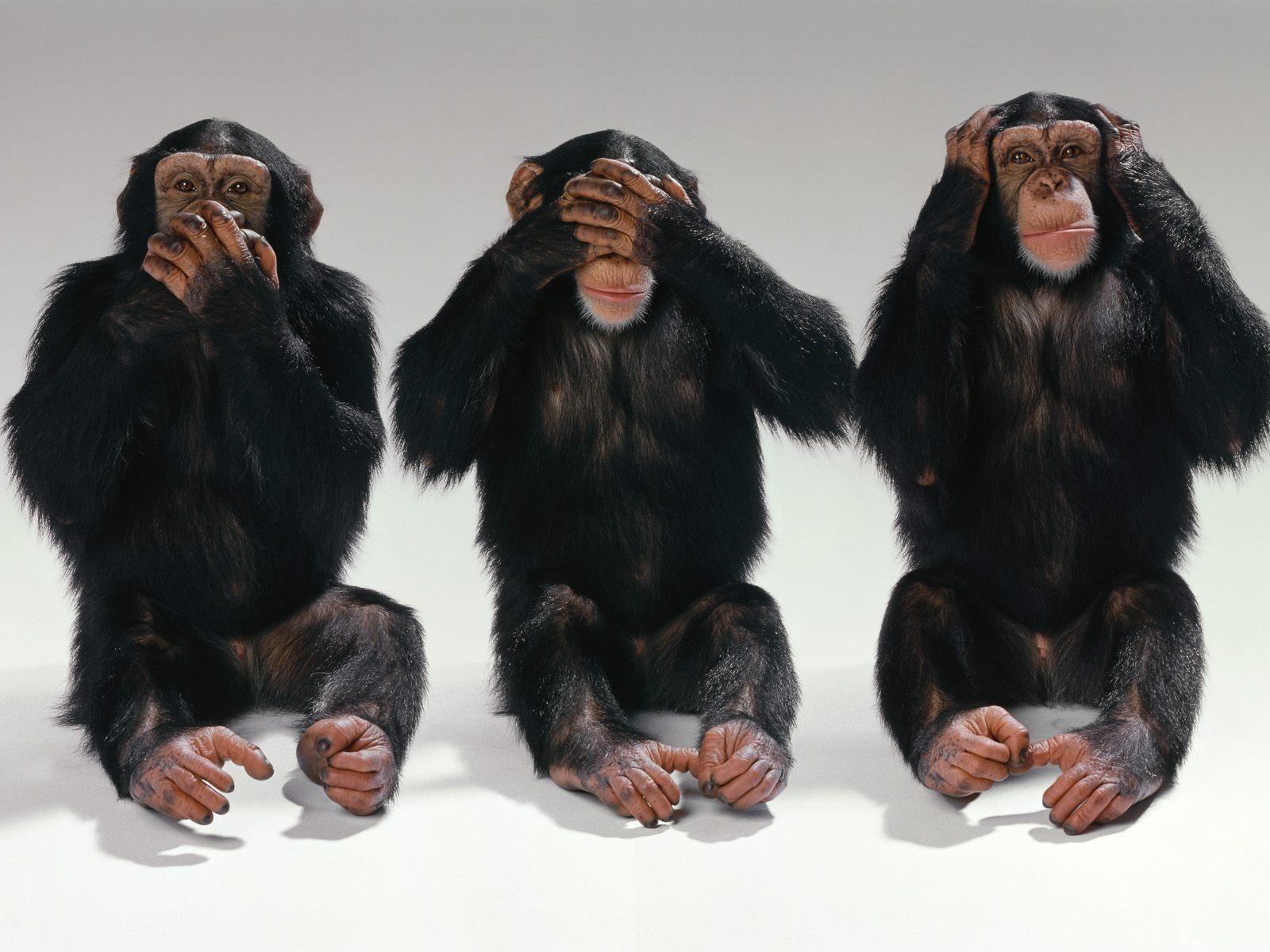 картинки трех обезьянок пчёл четкой