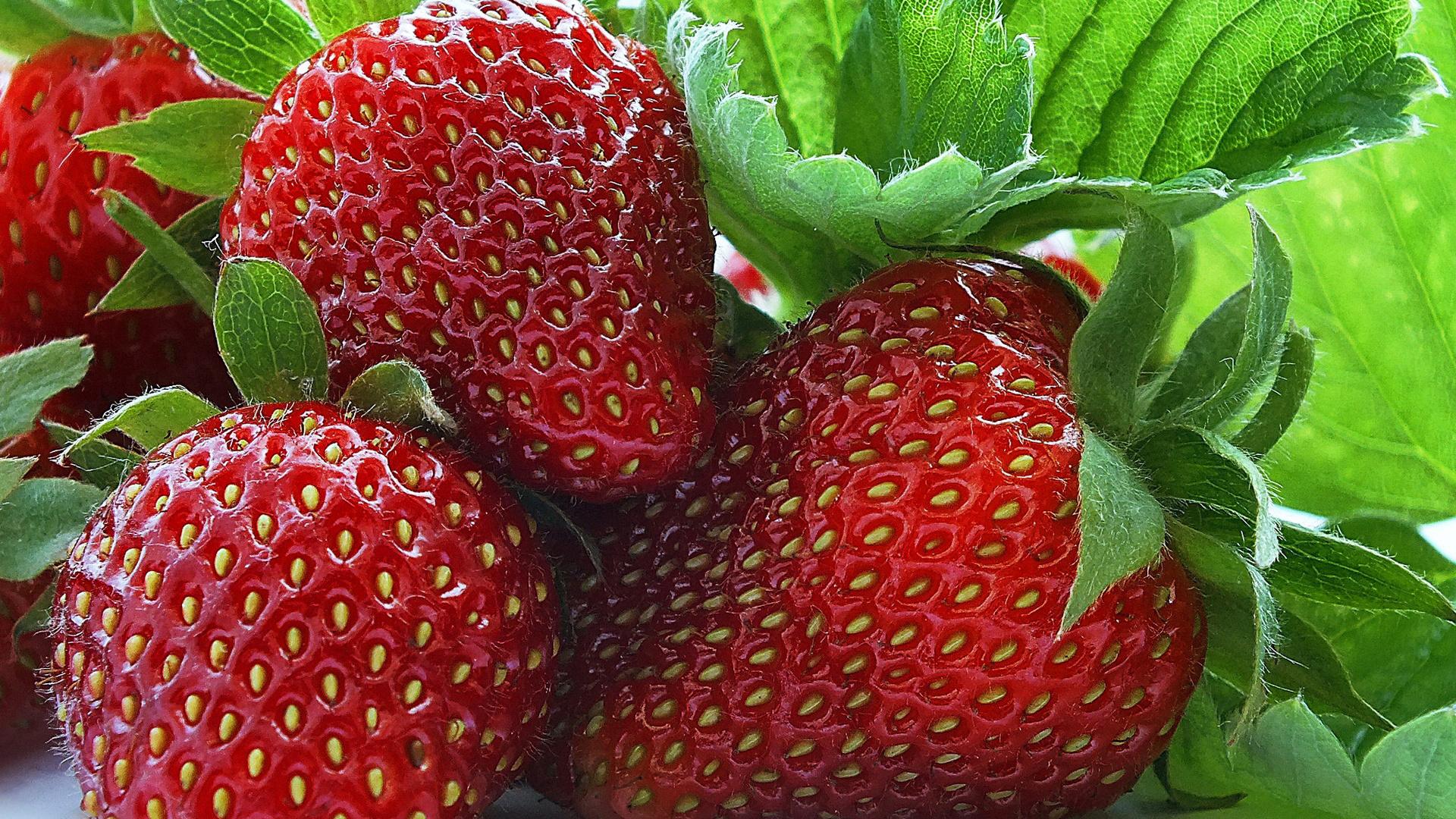 Картинка земляника ягода