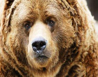 Картинки медведя