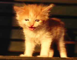 Картинки котят