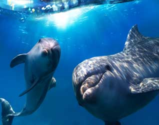 Дельфины картинки