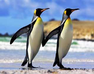 Пингвин картинки