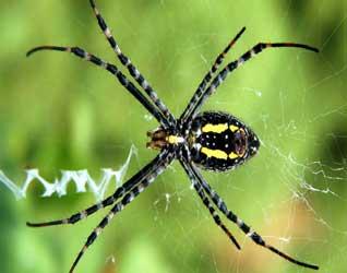 Картинки пауков