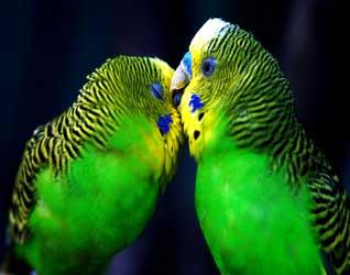 Картинки попугаев