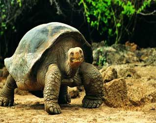 Картинки черепахи